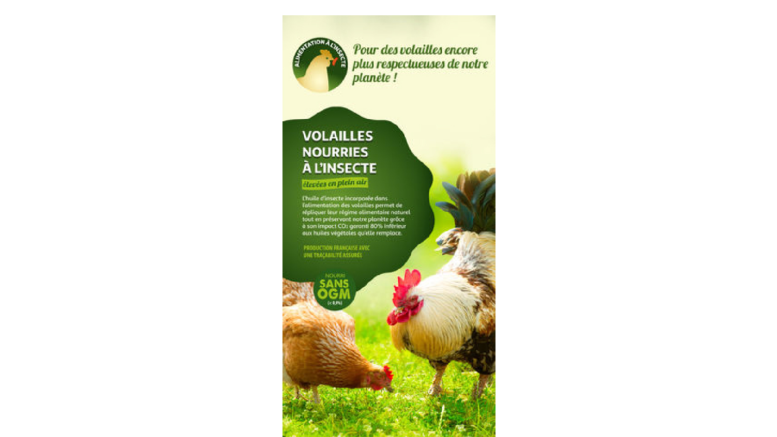 Auchan will offer chickens fed with insects
